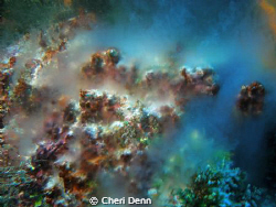 This picture of sponges spawning was taken at the Palanca... by Cheri Denn